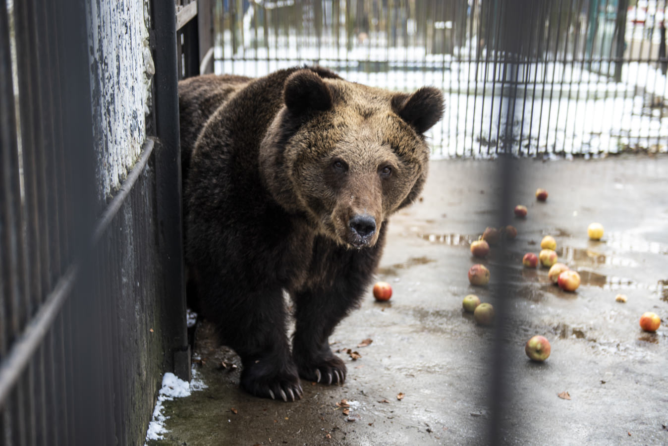 O plimbare prin Parcul Zoo de la Rădăuți (fotoreportaj)