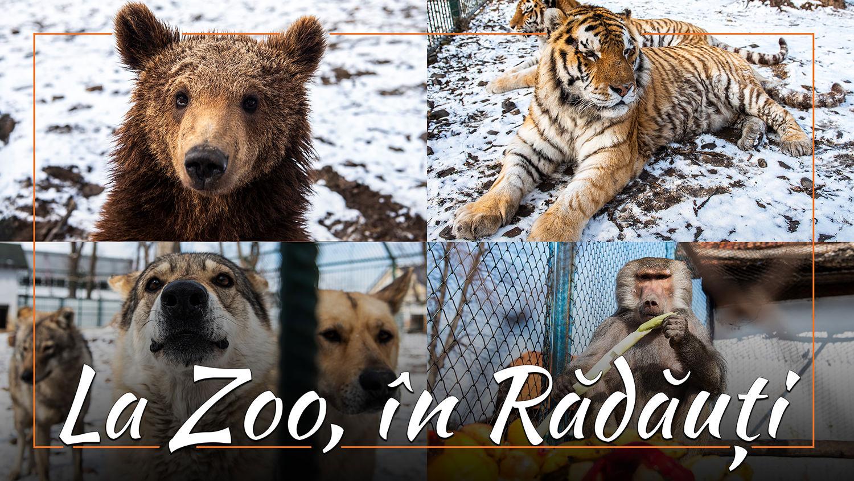 O plimbare prin Parcul Zoo de la Rădăuți